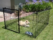 6x6x4'h kennel shown with optional shade top